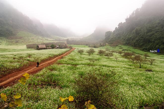 Cánh đồng hoa cải ướt đẫm trong sương